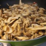 【きょうの料理】大原千鶴のお助けレシピフライパン焼ききのこ他一品